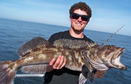 Ling Cod (pictured here) and rockfish (also called rock cod) are the two main fish we catch on our bottomfishing trips. 10 fish limit for rockfish, and 2 fish limit for ling cod (no size maximum).